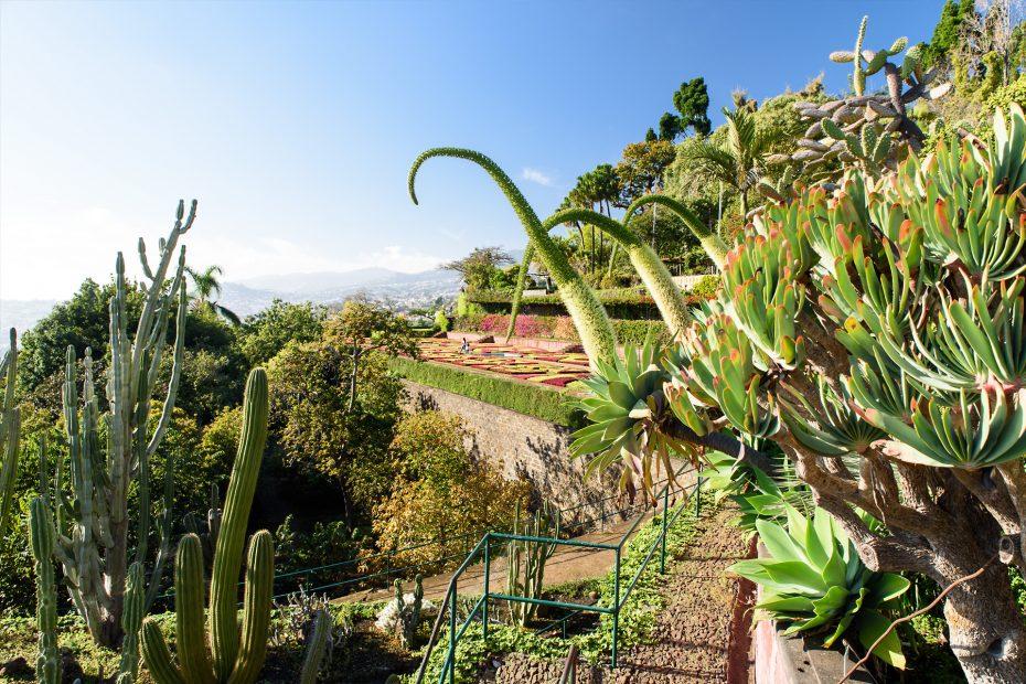 Madeira - Jardim Botanico Funchal