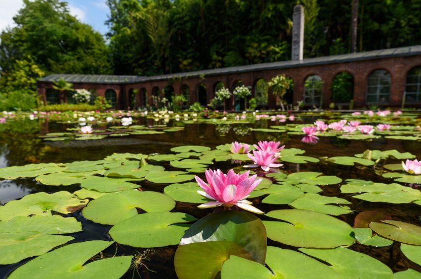 Garten Lago Maggiore